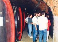 Bzeneck� vinobran�