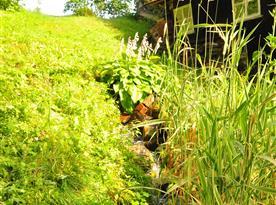 Potok za chalupou