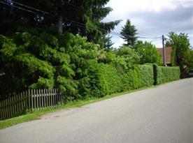 Chalupa oddělená hustým živým plotem od příjezdové cesty