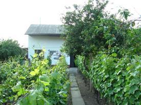 Pohled na vinný sklep z vinohradu