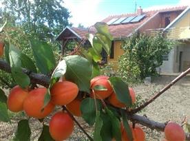 Pohled na chalupu z meruňkového sadu