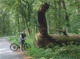 lužní lesy okolo Břeclavi - cesta na Janohrad