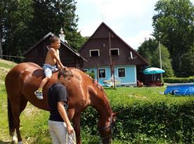 U nás ubytování i s koněm! Vezměte svého miláčka s sebou na dovolenou!!