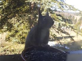 Veverky až na parapetu