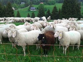 Všude je nějaká černá ovce:-))