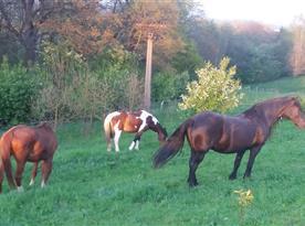 Pro naše hosty pořádáme i jízdy na koních.