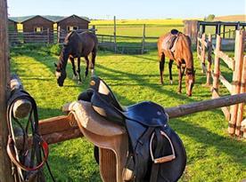 Možnost vyjížděk na koních
