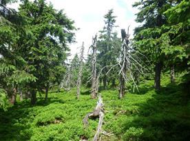Okolní příroda protkána turistickými stezkami