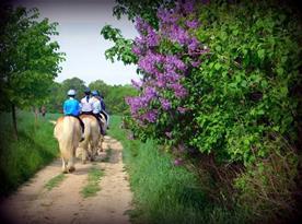 koně Štětice