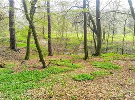 Čechův mlýn - okolí