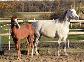 Možnost projížďky na koních