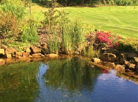 Zahrada s jezírkem