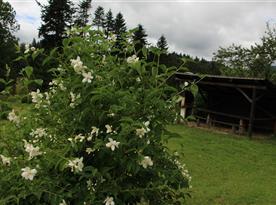 altanok, zahradny krb
