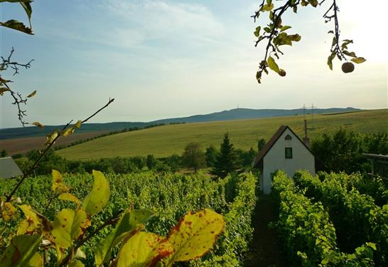 Chata Ve vinohradě U Frantika Bukovany