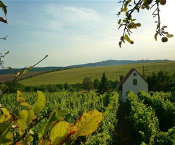 Chata Uprostřed vinohradu Bukovany